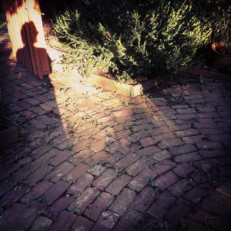 garden-shadow.jpg