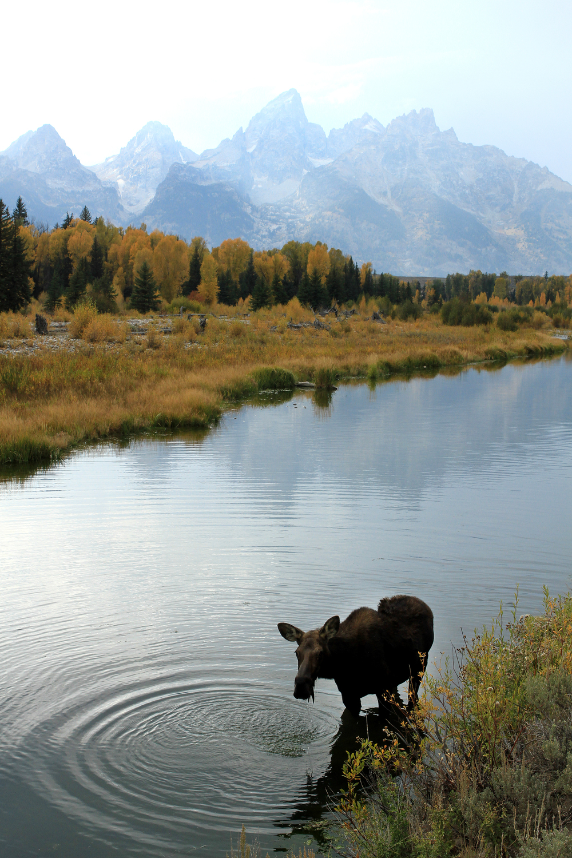 LB2012.09.23.moose.jpg
