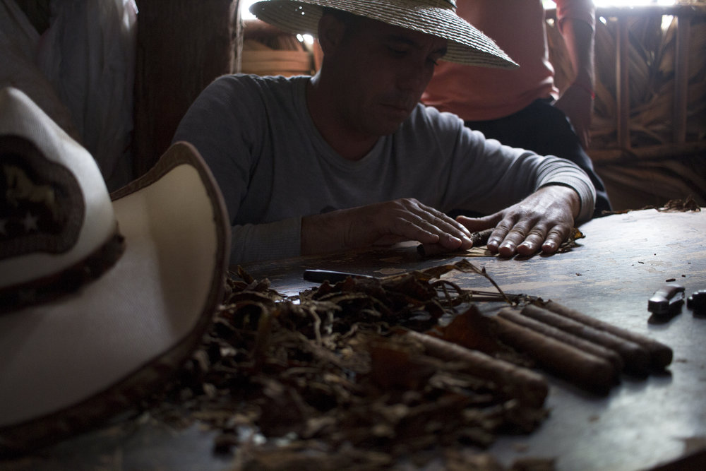 A tobacco farmer rolls a cigar in his dry house