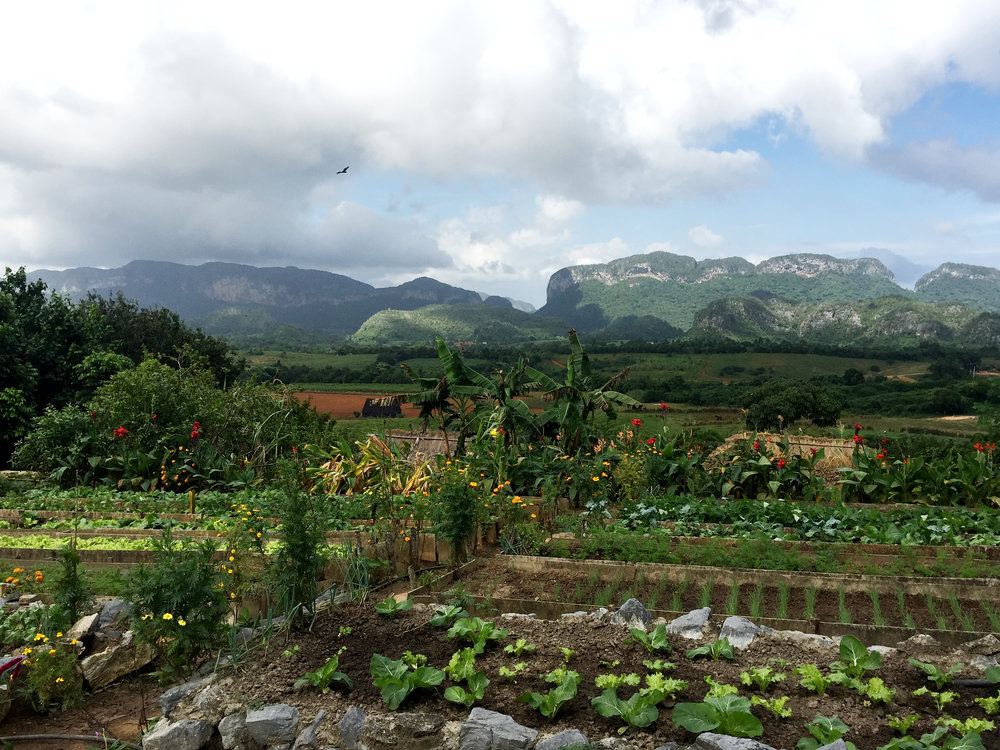 View of and from the finca