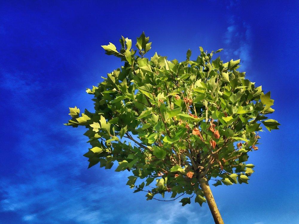 tree-824429_1280.jpg