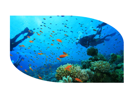 Are you ready to get hooked on the intoxication of scuba?  From the moment you dive below the surface of Jamaican waters, into the serene silence of the underwater world, you'll appreciate what made Jacques Cousteau so enamored of the aquatic life.  You'll find some of the best scuba diving sites in the world around Port Antonio.  Contact Reception to book your trip.  And it will be a trip.