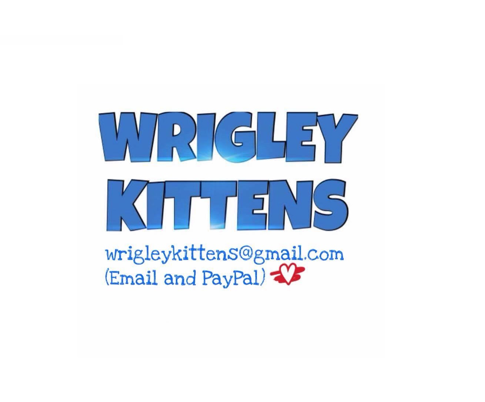 wrigley kittens 2.png