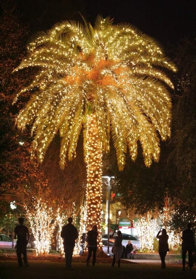 Palm Tree Series