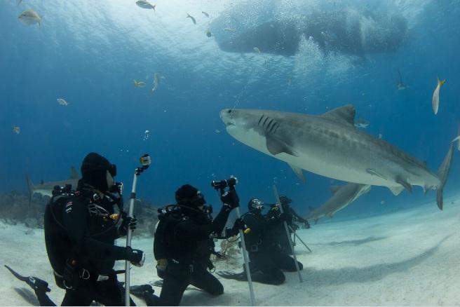 shark29.jpg