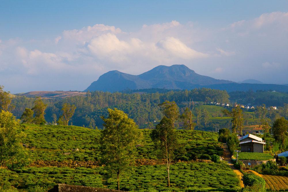 Nuwara Eliya-4155- Landscape in Nuwara Eliya.jpg