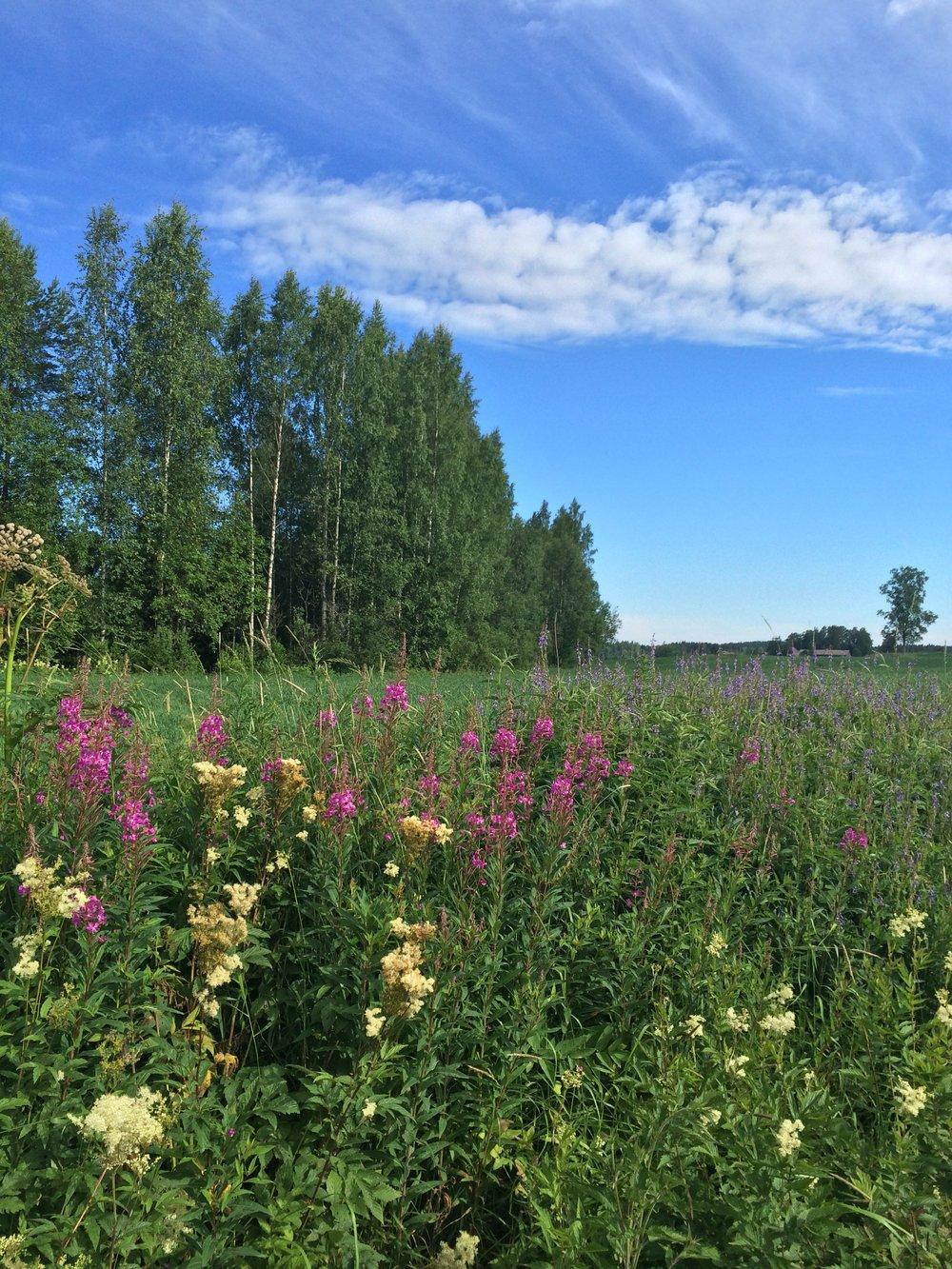 Finland in Summer.JPG