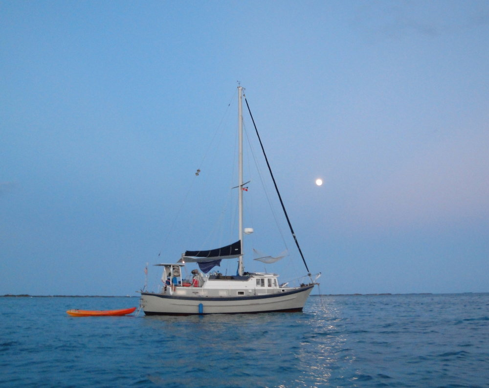 Pelican under moonlight.jpg