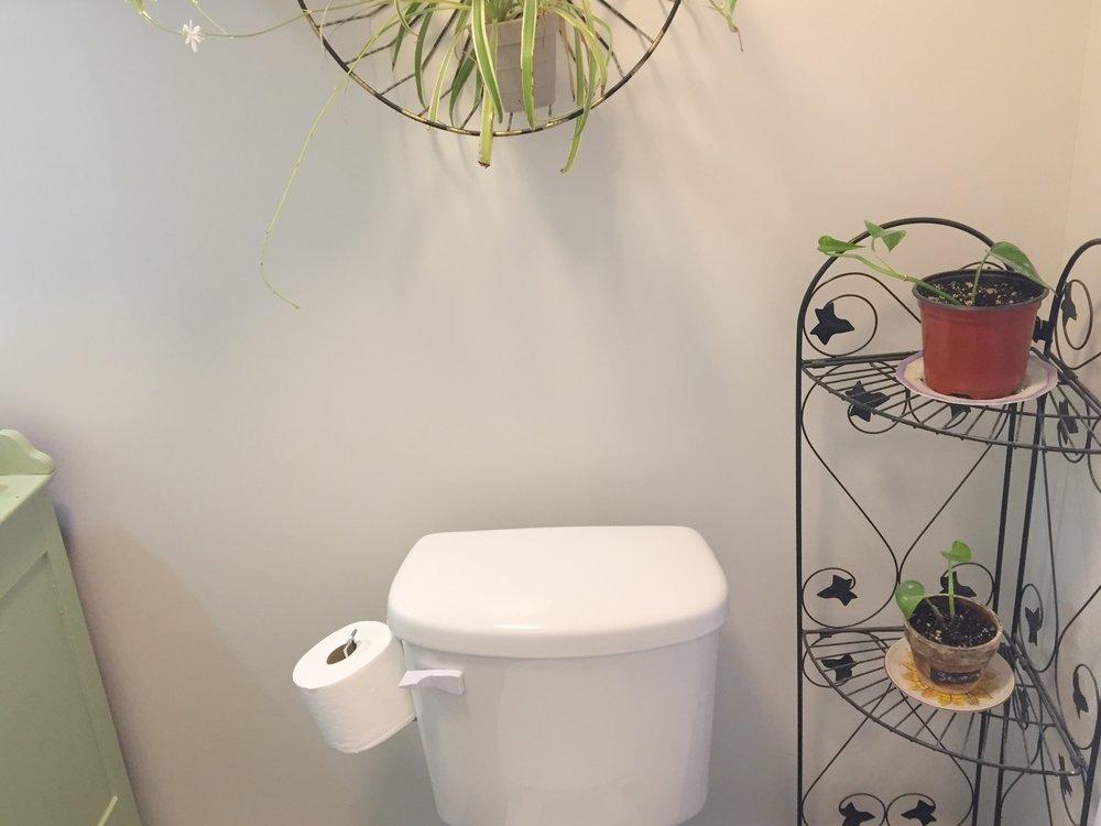 plants by toilet straight.jpg