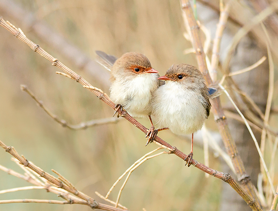 Began Two Little Wrens Photography business with Pete. <3