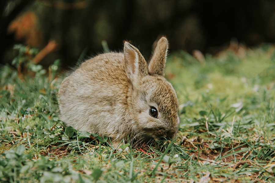 Bunny9.jpg