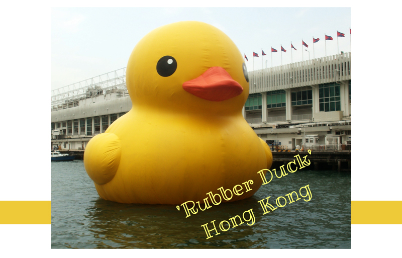 The Great Duck Race