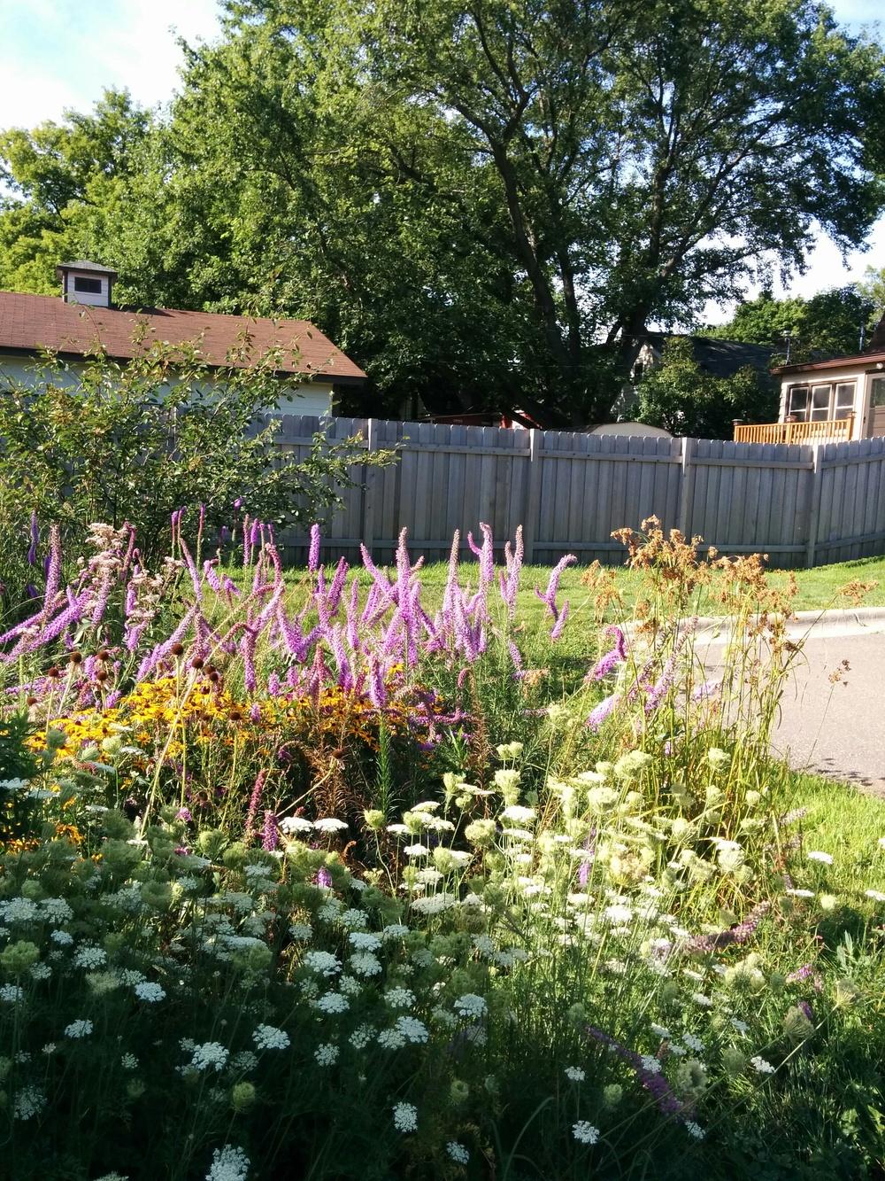 rain garden and fence.jpg