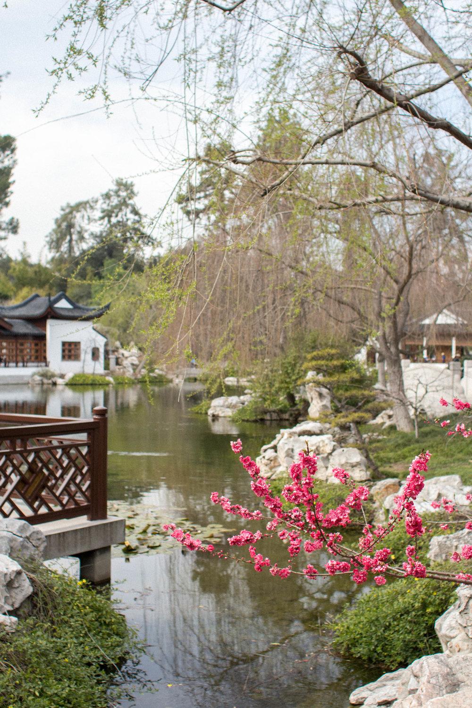Huntington Gardens Chinese Garden