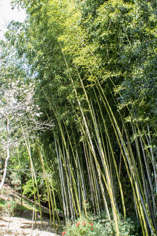 Huntington Gardens Bamboo forest