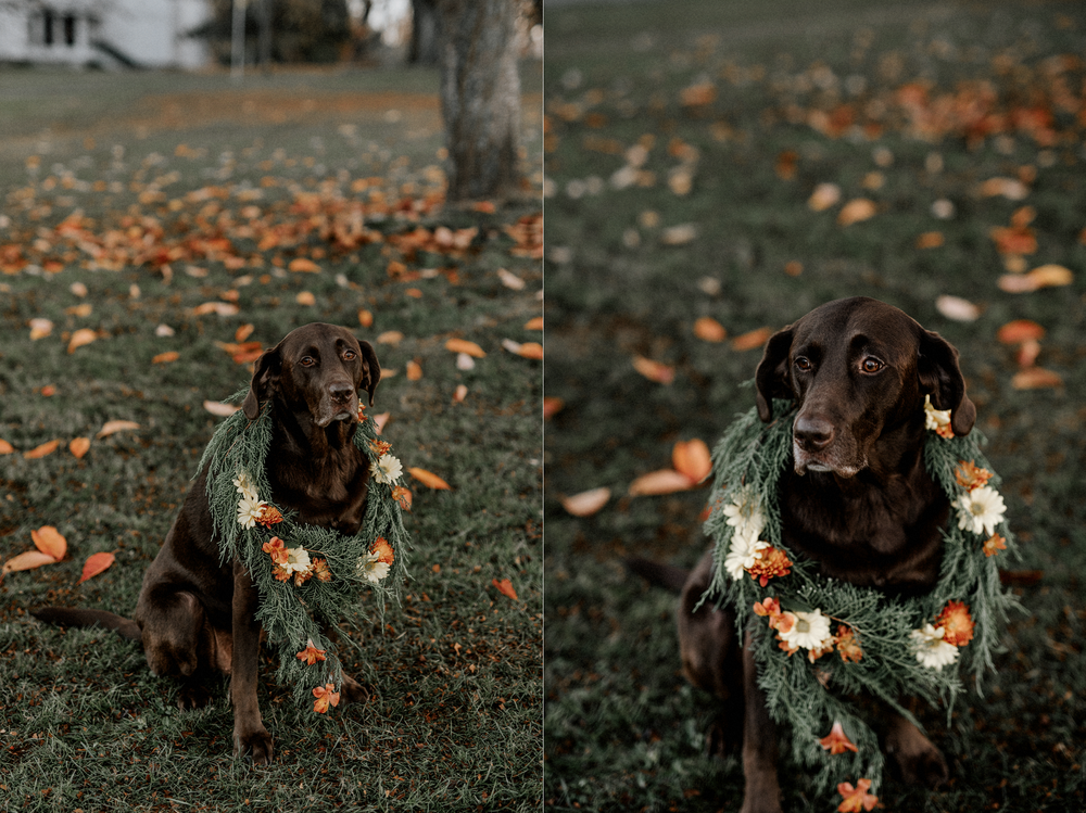 001-kaoverii-silva-sg-kitsilano-vanier-park-family-dog-photography-blog.png