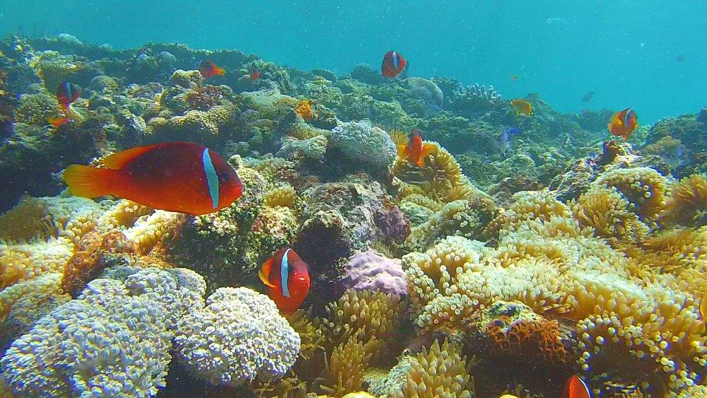 Snorkel Fiji
