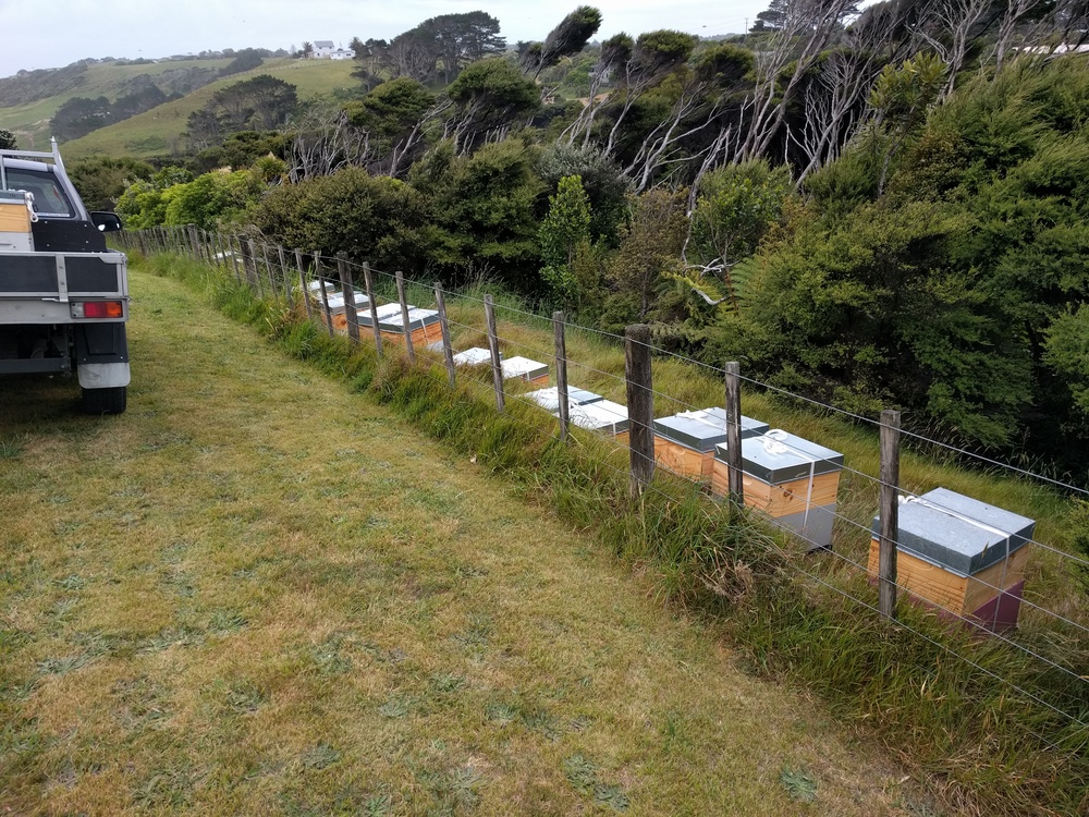 Beehives along a fence - an increasingly familiar sight