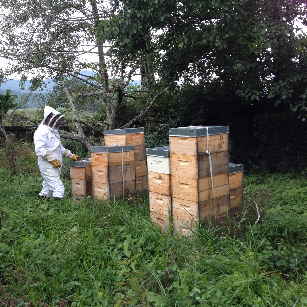 Stacks of beehives will become more and more common
