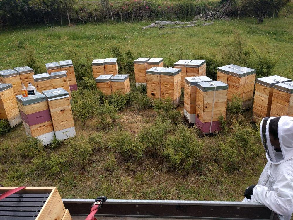 beehives full of honey