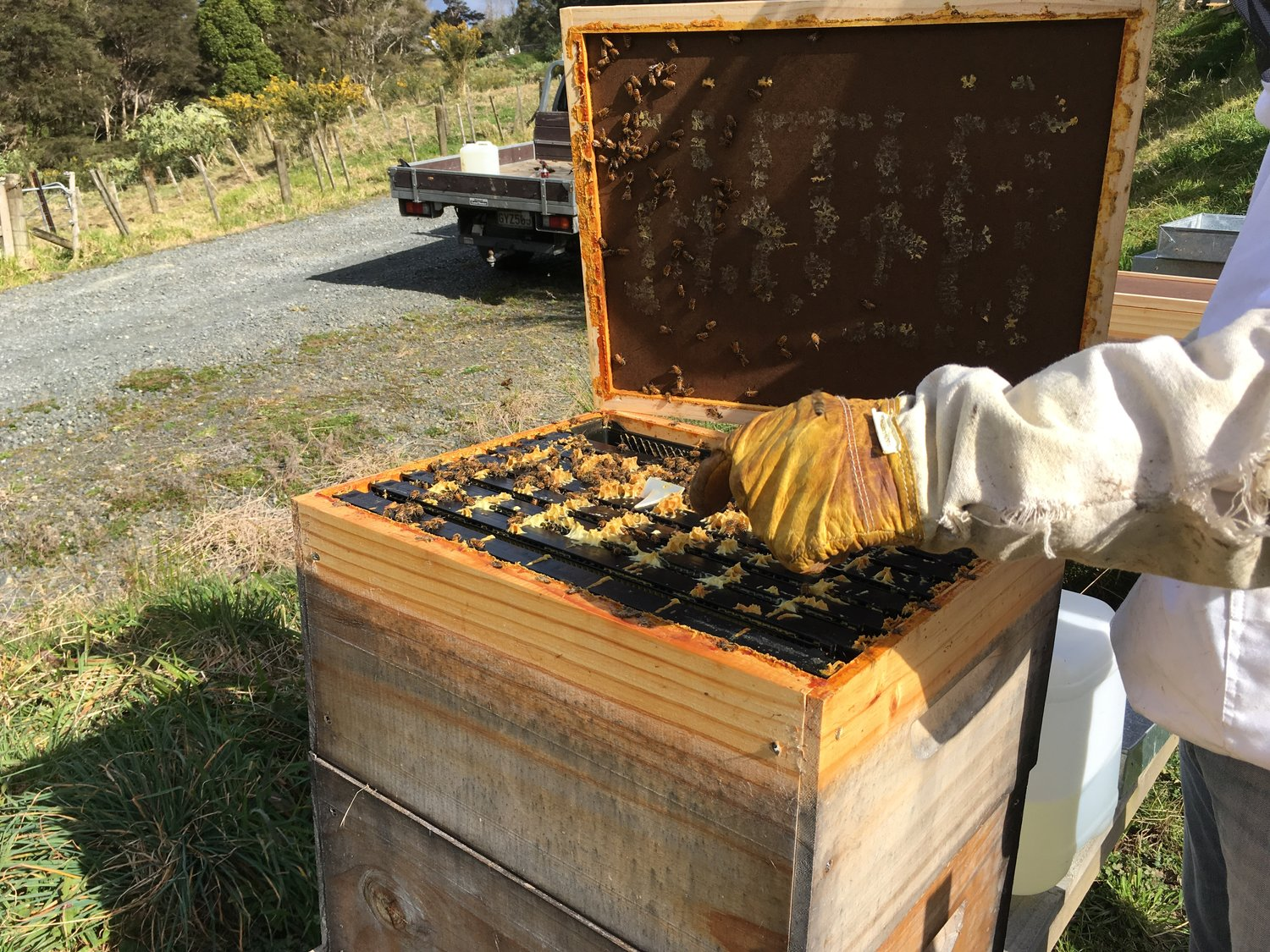 Which varroa treatment is best? — Business of Bees
