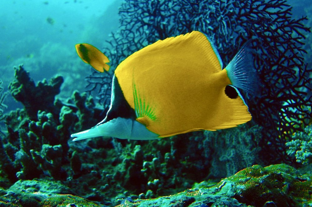 Koh Weo Fish