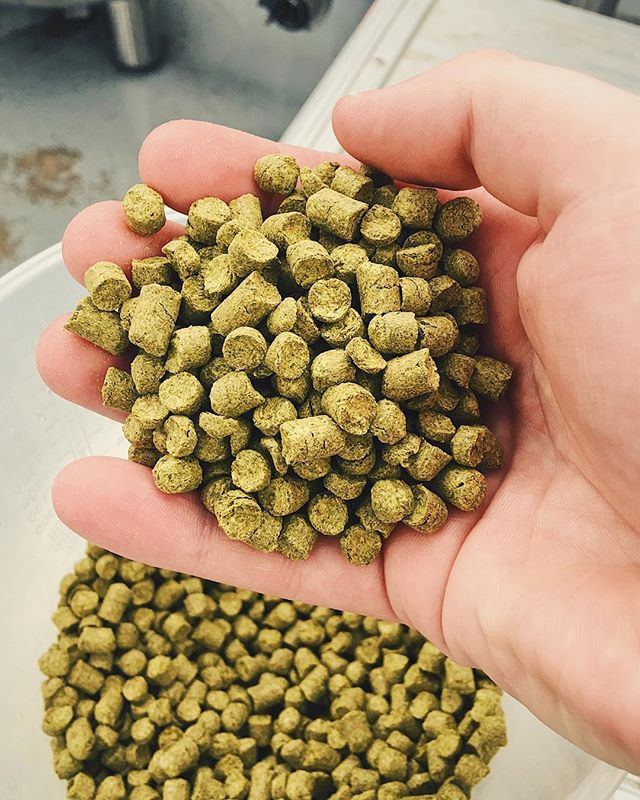 Brewed a fresh batch of Medal of Mosaic today and had to take a moment to appreciate how awesome smelling this hop really is!  What's your favourite hop to brew with?  #Brewery #BreweryTap #Taproom #CraftTap #CraftTaproom #CraftBeer #CraftBrewery #UKCraftBeer #UKCraftBrewery #Wirral #Liverpool #CraftNotCrap #UKTaproom #DrinkFresh #DrinkLocal #Mosaic #MosaicIPA #MosaicPale #SingleHopIPA