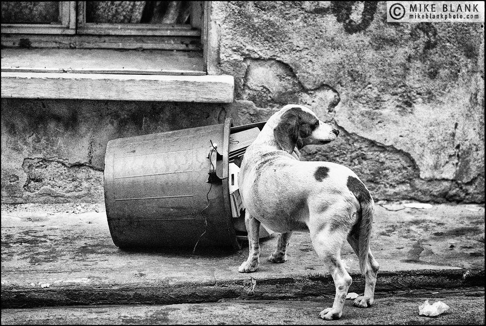 Dog, 2002
