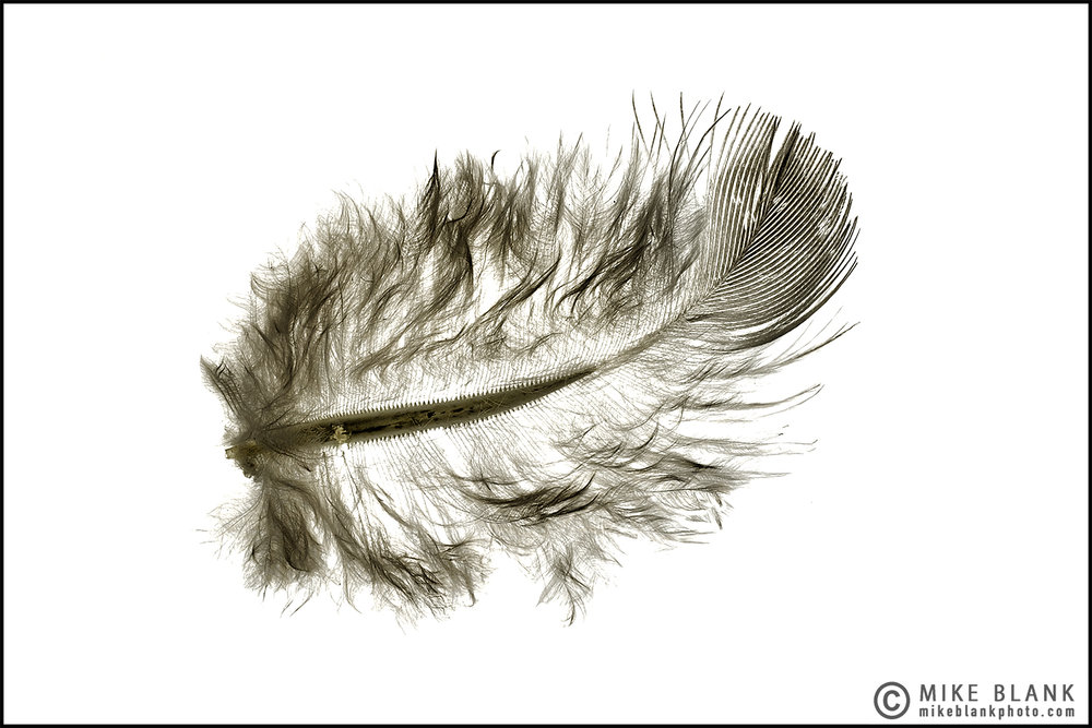 Feather 2016