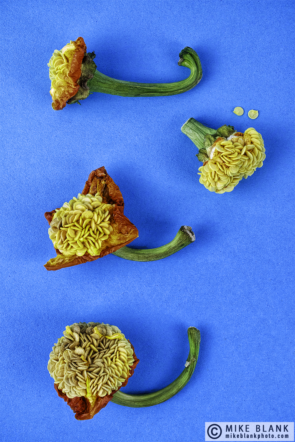 Sweet pepper seeds #6, 2017