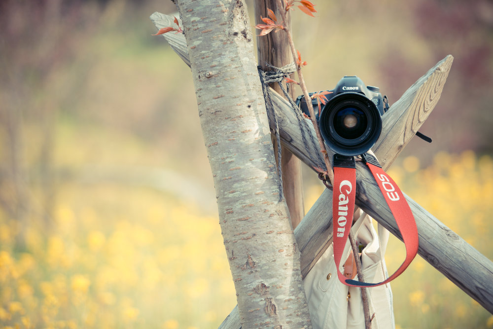 PHOTO GALLERY - フォトギャラリー