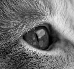 cat-eye-photo.jpg