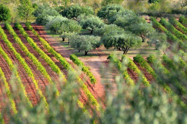 The surge of global interest in Provence rosé has been a boon for the region's producers. But regulations in France limit the amount of land available for planting grapes.