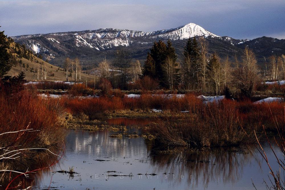 Alone  Location: Grand Teton National Park, Wyoming, USA