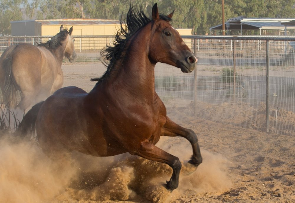 Flash and Hound Horse playing