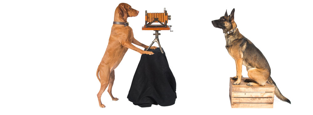 Flash and Hound Pet Photography, Scottsdale AZ