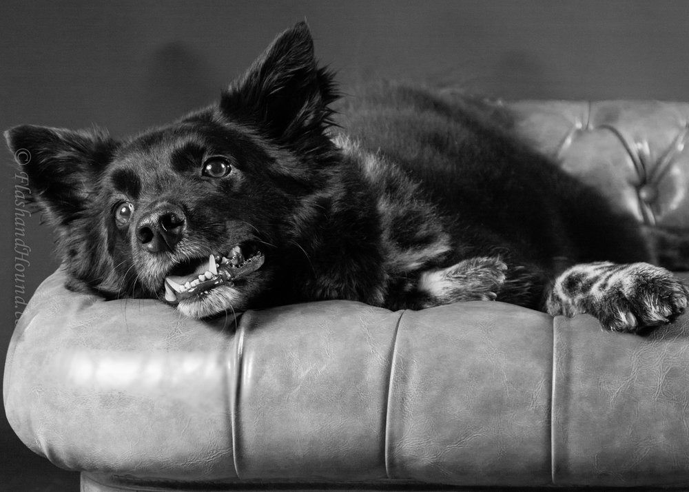 Dog resting on couch caption