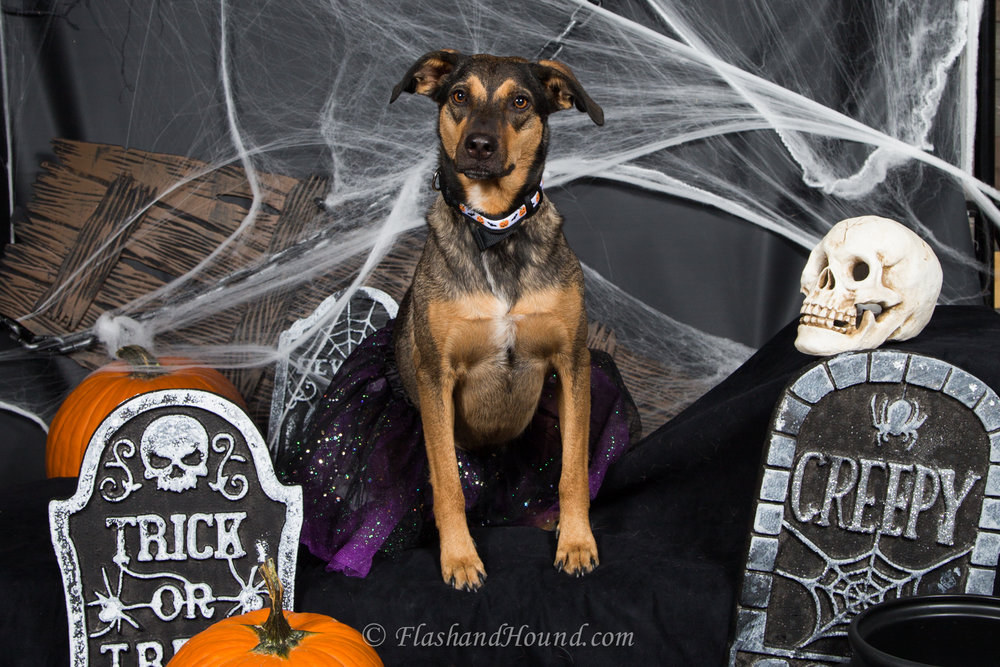 Flash_and_Hound_Halloween_photo