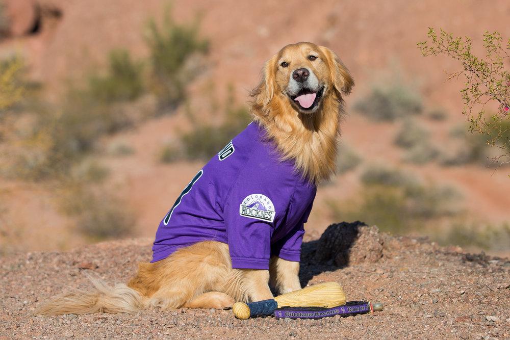 Flash and Hound Golden retriever Colorado Rockies jersey