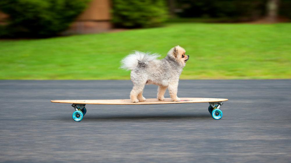 tex skateboard.jpg