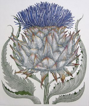 Did you know? -  The Scottish Thistle is the oldest recorded 'National Flower' and is probably one of the most well-known, and easily recognized symbols of Scotland.England has the rose, Wales the daffodil, Ireland the shamrock and Scotland…the thistle.