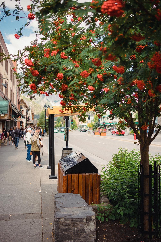 Banff-Canada-Gallery-18.jpg