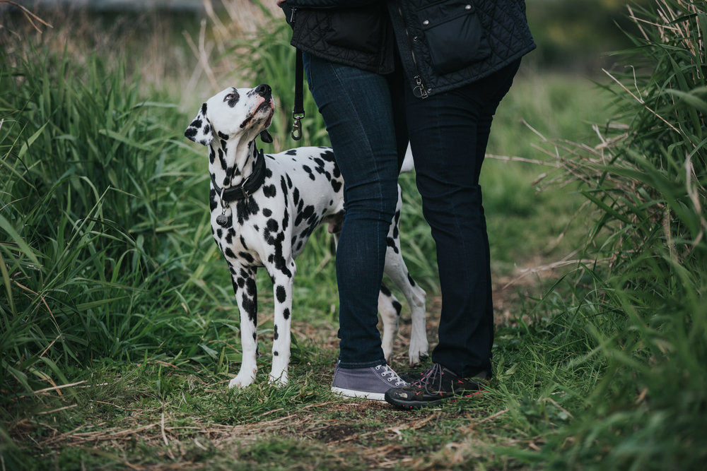 29 bring your dalmatian dog engagement shoot wedding photographer.jpg
