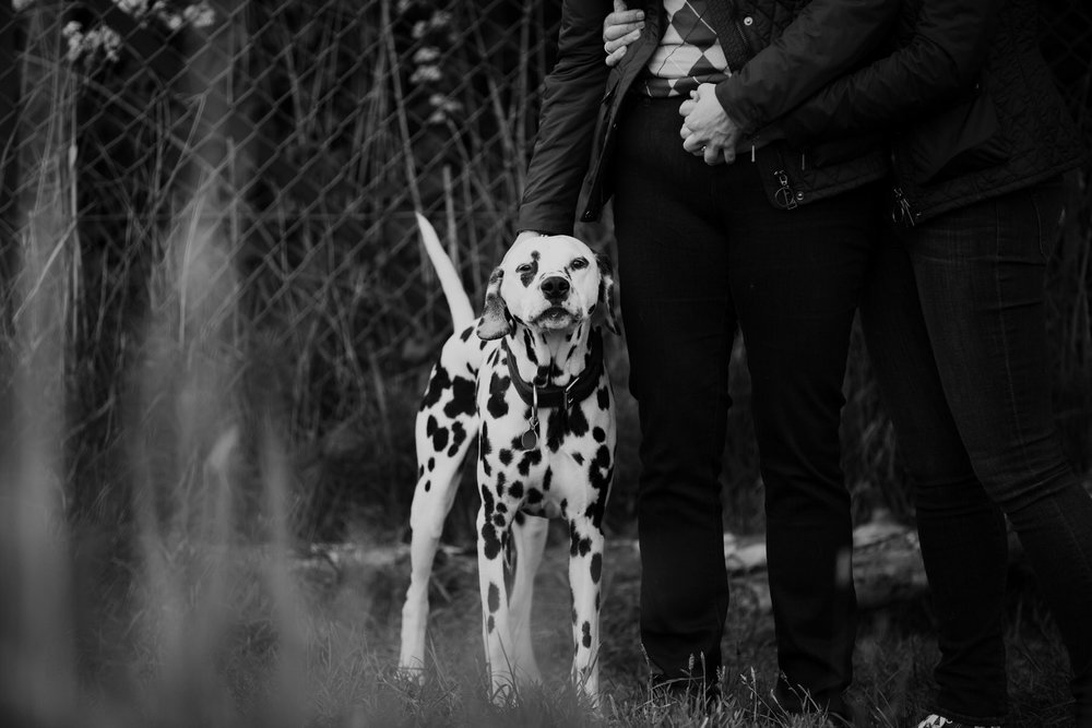 64 unobtrusive wedding photographer East London dalmatian dog.jpg