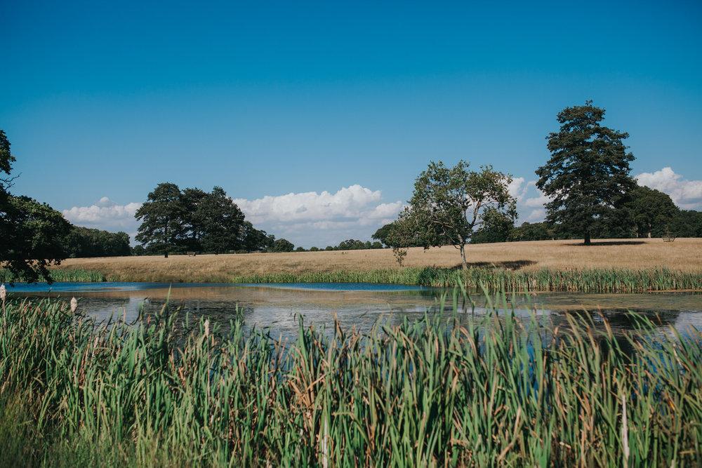119 Knepp Castle reeds lake blue skies .jpg