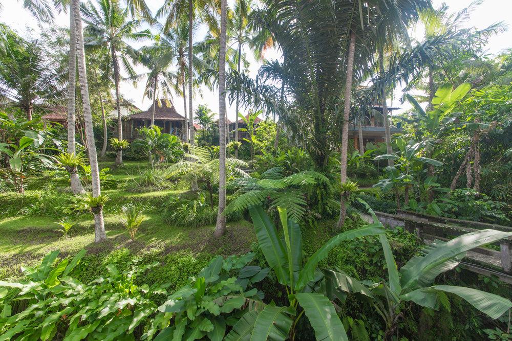 Bali-45.jpg