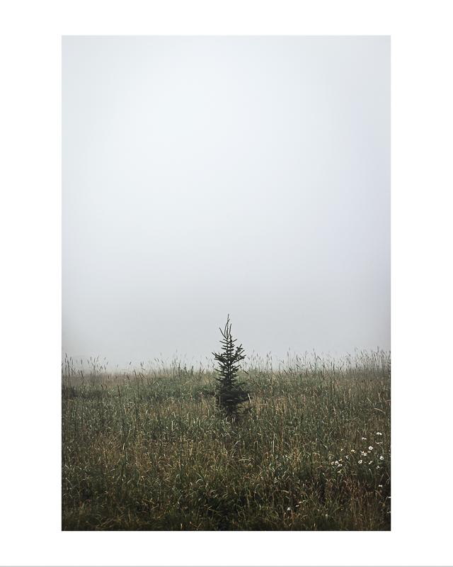 Petit arbre dans la brume,  Impression jet d'encre     16X20 pouces :  Prix avec cadre : 120,00$                 Prix sans cadre : 95,00$