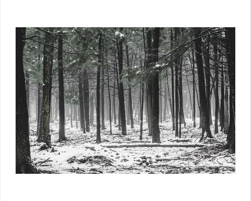 Forêt dans la brume,  Impression jet d'encre    16X20 pouces :  Prix avec cadre : 100,00$                 Prix sans cadre : 75,00$