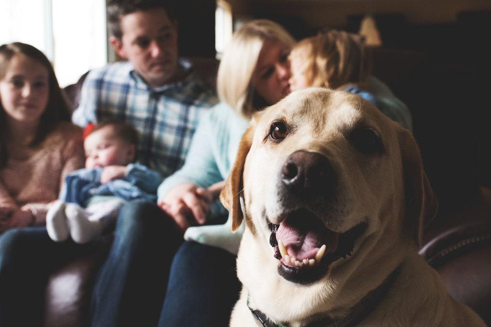 karra lynn lifestyle newborn photographer - dog