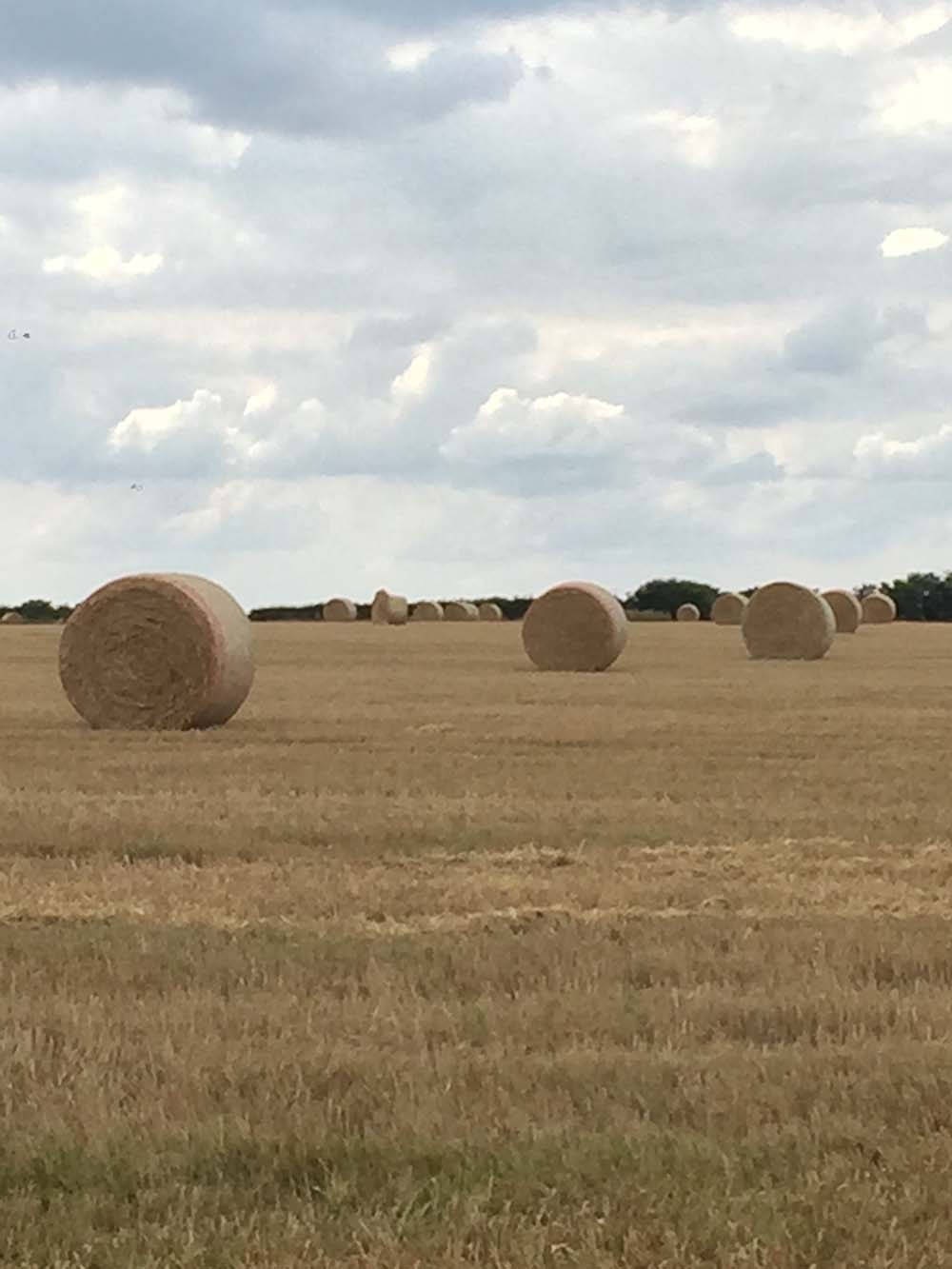 Bales of hay dotting the landscape